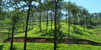 Doomni Estate
